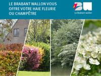 Le Brabant wallon vous offre une haie fleurie ou champêtre