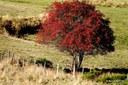 Semaine de l'Arbre : découvrez le sorbier des oiseleurs, et où nous plantons cet arbre